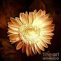 Elegant Flower by Denise Tomasura