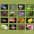 Elegant Flowers Collection by Inspired Nature Photography Fine Art Photography
