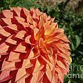 Elegant In Orange by Jacqueline Athmann