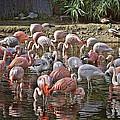 Elegant Pink by Leslie Reagan -  Joy To The Wild Photos