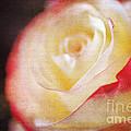 Elegant Rose by Darren Fisher