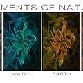 Elements Of Nature by Marianna Mills