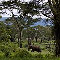 Elephant   #0068 by J L Woody Wooden
