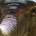 Elephant  by A Rey