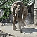 Elephant by Airestudios Photography