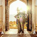 Elephant At Amber Palace Jaipur,india by Mlenny