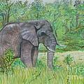 Elephant At Kruger by Caroline Street