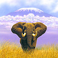 Elephant At Table Mountain by MGL Studio - Chris Hiett