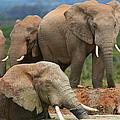 Elephant Bath by Bruce J Robinson