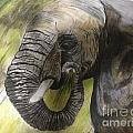 Elephant by Deborah Vicino