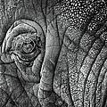 Elephant Eye by Sebastian Musial
