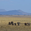 Elephant Family With Landscape by Tom Wurl