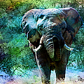 Elephant - Featured In Comfortable Art- Wildlife- And Nature Wildlife Groups by Ericamaxine Price