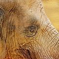 Elephant by Heike Hultsch