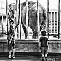 Elephant I by Chuck Kuhn