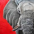 Elephant by Ilse Kleyn
