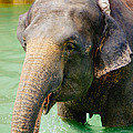 Elephant In Water by Pati Photography