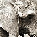 Elephant by Jackie Farnsworth