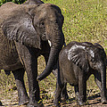 Elephant Mom And Baby by Suanne Forster