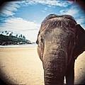Elephant On The Beach by Carol Whaley Addassi