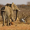 Elephant On The Run by Paul W Sharpe Aka Wizard of Wonders