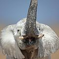 Elephant Portrait by Johan Swanepoel