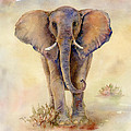 Elephant  by Amy Kirkpatrick