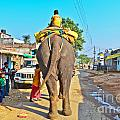 Elephant Ride In Street by Image World
