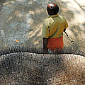 Elephant Ride by Money Sharma