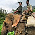 Elephant Rides by James Wheeler