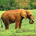 Elephant by Rodney Lee Williams