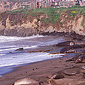 Elephant Seals On The Beach, San Luis by Panoramic Images