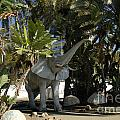 Elephant Show In Marbella by Brenda Kean