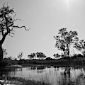 Elephant Skull On Riverbank, Okavango by Cameron MacPhail