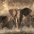 Elephant Stampede by Daniel Eskridge