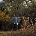 Elephant Trail by Image Takers Photography LLC - Carol Haddon