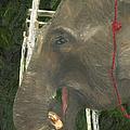 Elephant Under His Thumb by Belinda Greb