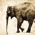 Elephant Walk by Athena Mckinzie