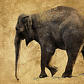 Elephant Walk II by Athena Mckinzie