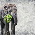 Elephant With A Snack by Tom Gari Gallery-Three-Photography