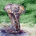 Elephant by Zaira Dzhaubaeva