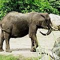 Elephant by Zina Stromberg