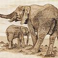 Elephants by Danette Smith