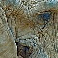 Elephant's Face by Mae Wertz