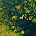Elephants From Above by Marc Levine