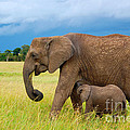 Elephants In Masai Mara by Charuhas Images