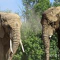Elephants In The Sand by Nina Silver