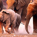 Elephants Stampede by Johan Swanepoel