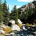 Eleven Mile Canyon Stream by Marilyn Burton