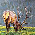 Elk by Aaron Spong